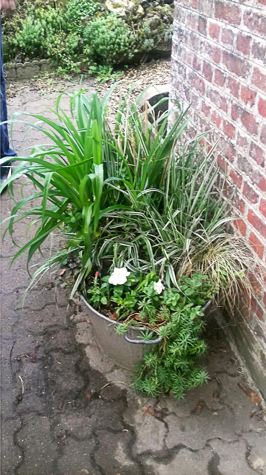 Création d'une jardinière de fleurs dans une bassine en métal