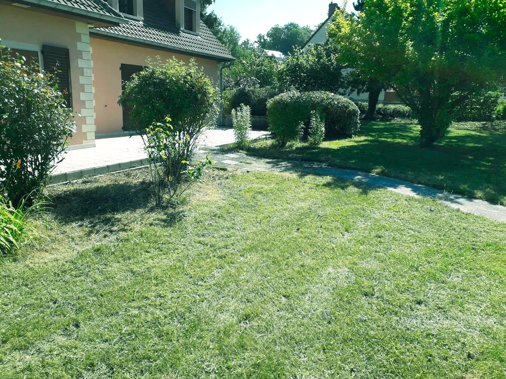 Taille, coupe et tonte pour l'entretien d'un jardin